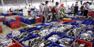 sukses-yohanes-chanrda-ekajaya-di-dunia-bisnis-ikan