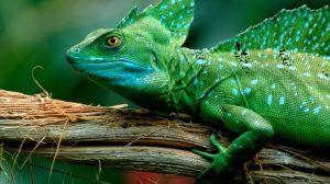 yohanes-chandra-ekajaya-reptil-sebagai-hobi-yang-menguntungkan