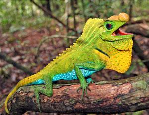 yohanes-chandra-ekajaya-reptil